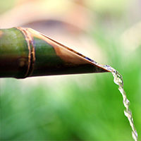 biomasse-eaux-usees-bamboo-for-life-accueil