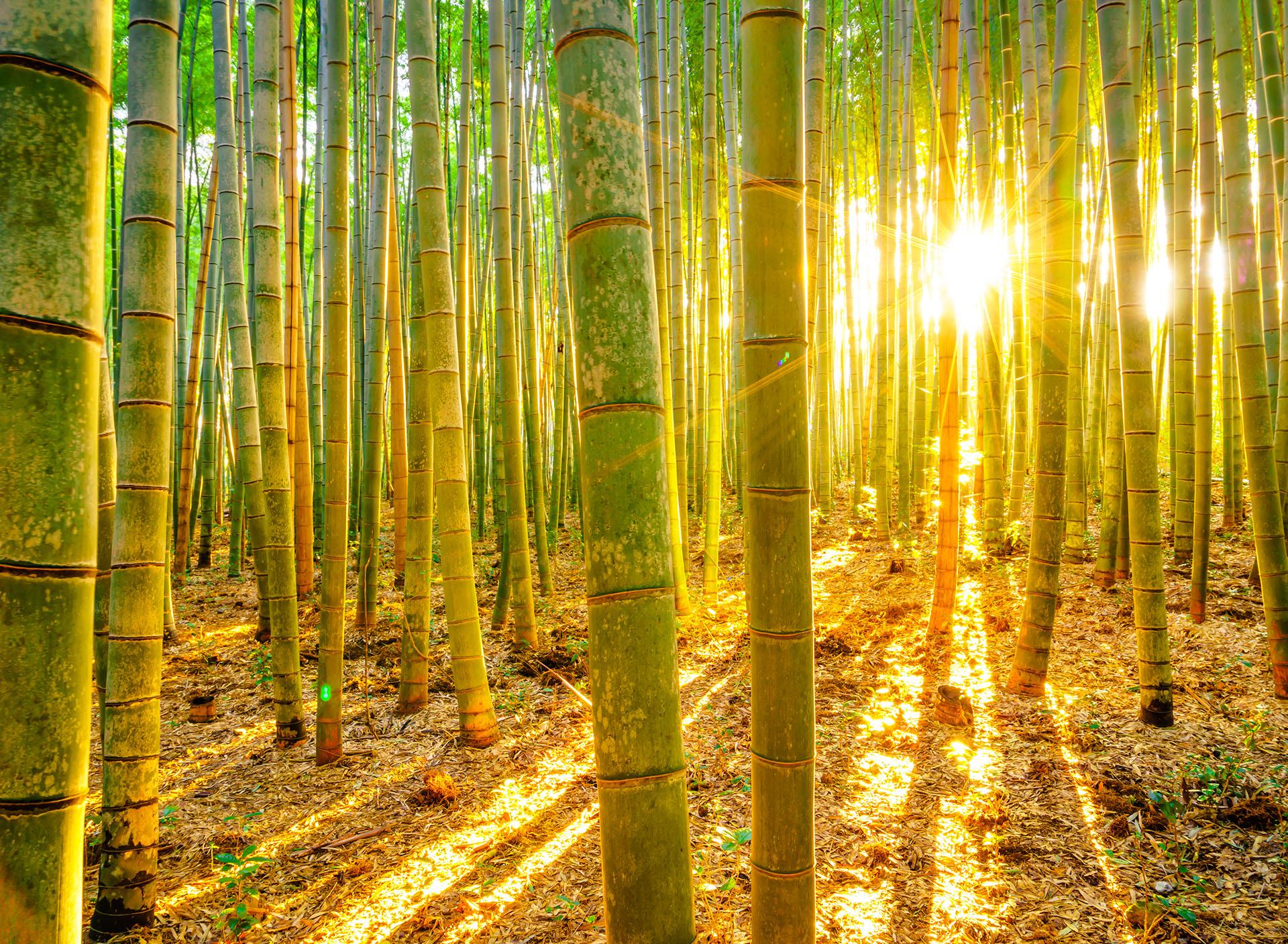 Bambou-station-végétal
