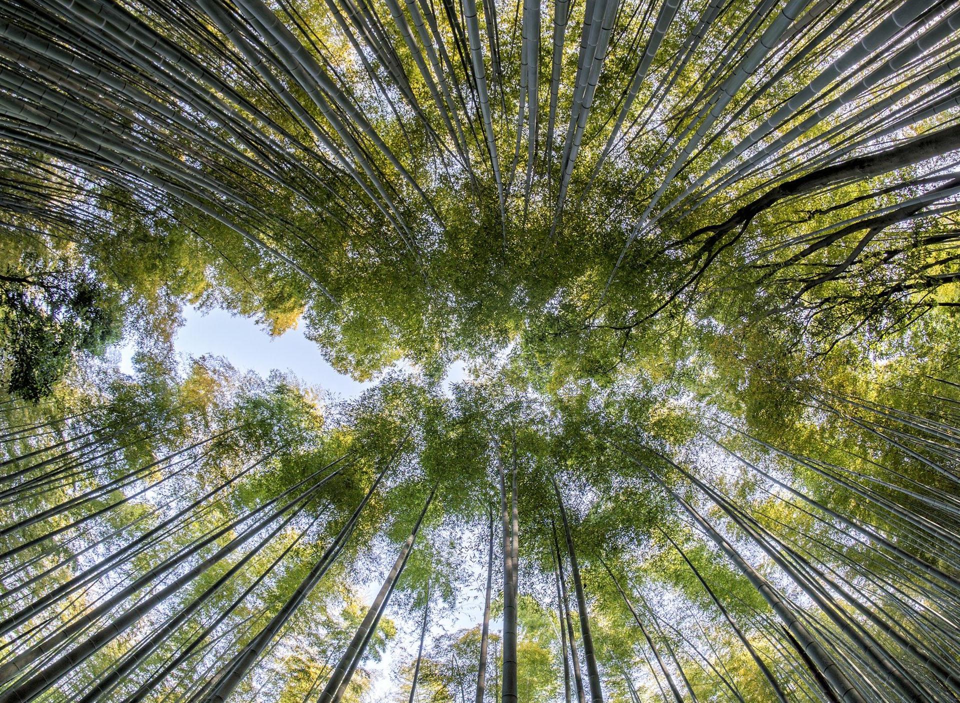 dimensionnement-assainissement-traitement-eaux-uses-procede-bambou-bamboo-for-life