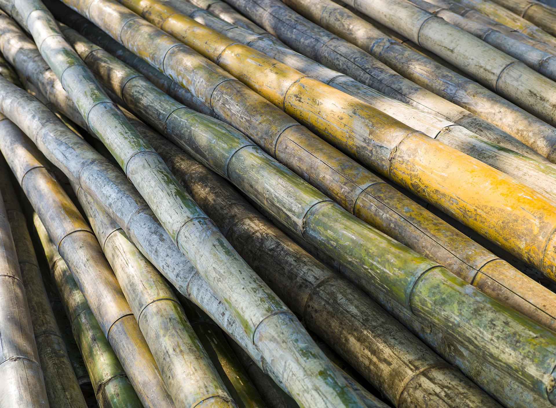 filieres-valorisation-utilisation-qualite-bambou-bamboo-for-life-3