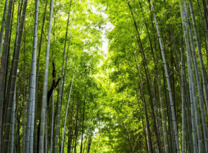 maitrise-du-bambou-contact-presse-technologie-eaux-uses-bamboo-for-life-2