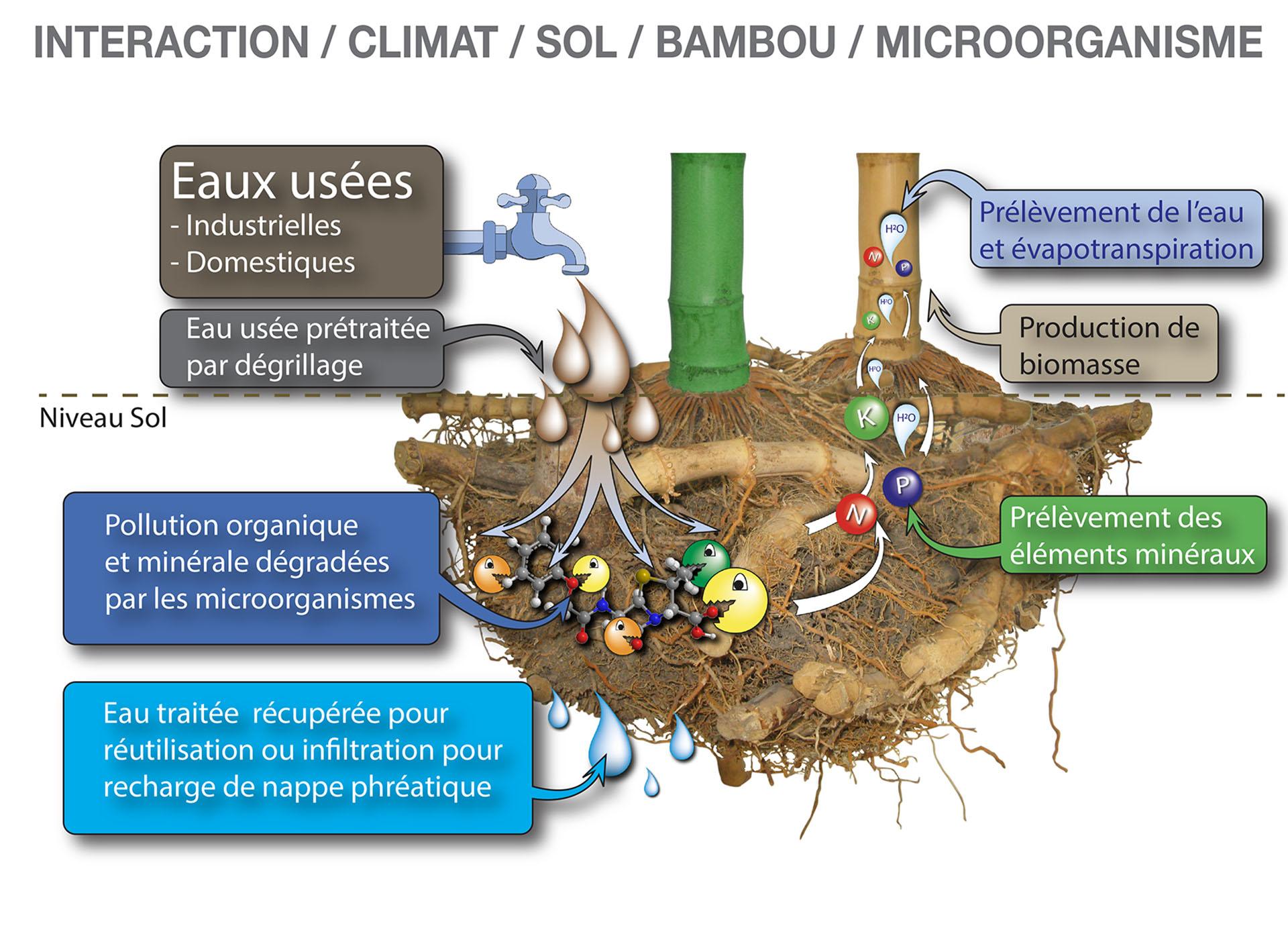 comment-ca-marche-fonctionnement-technologie-bambou-assainissement-procede-bambou-bamboo-for-life
