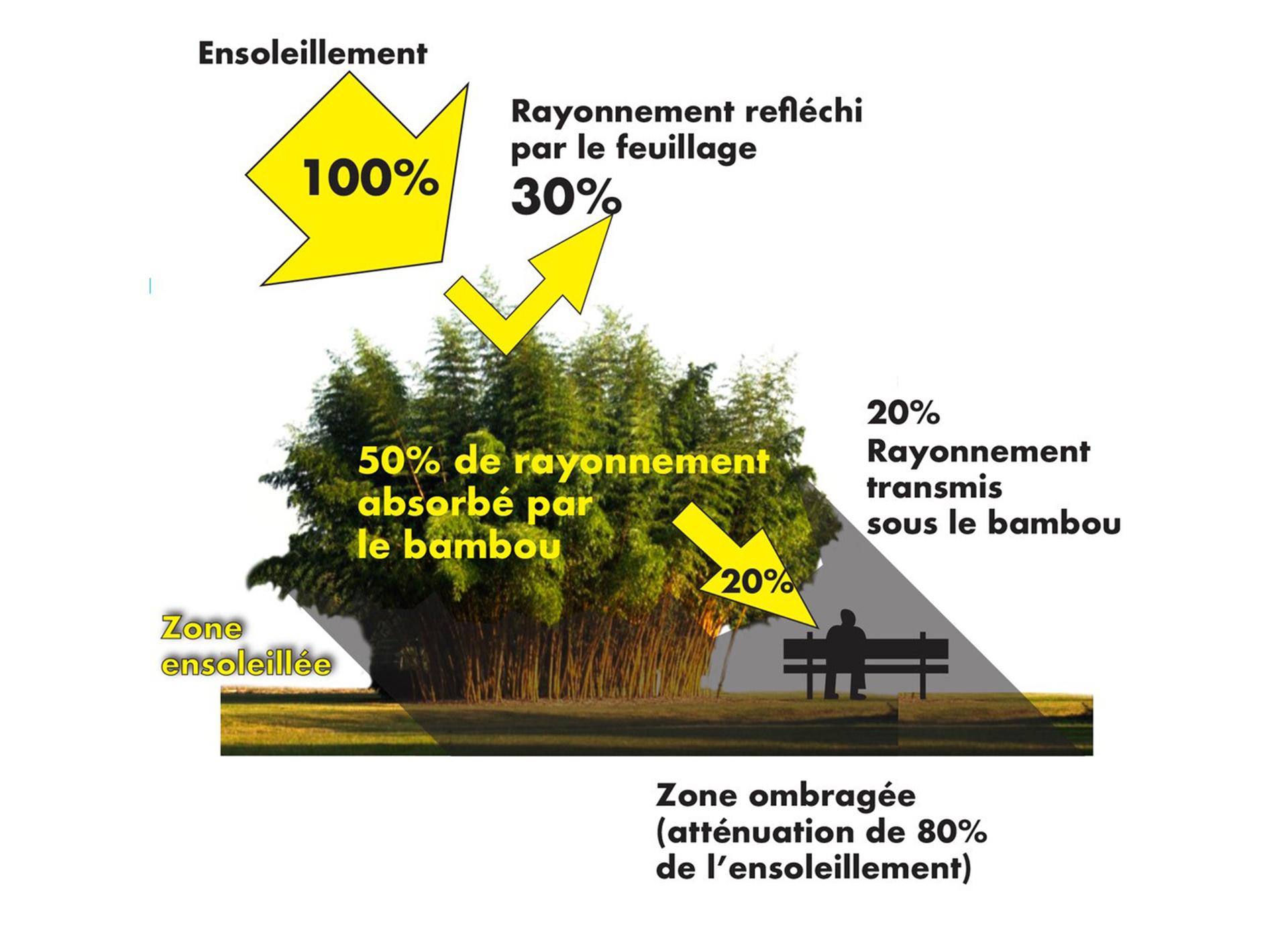 ilots-de-fraicheur-rafraichissement-bioclimatique-bambou-bamboo-for-life-Effet-canopee