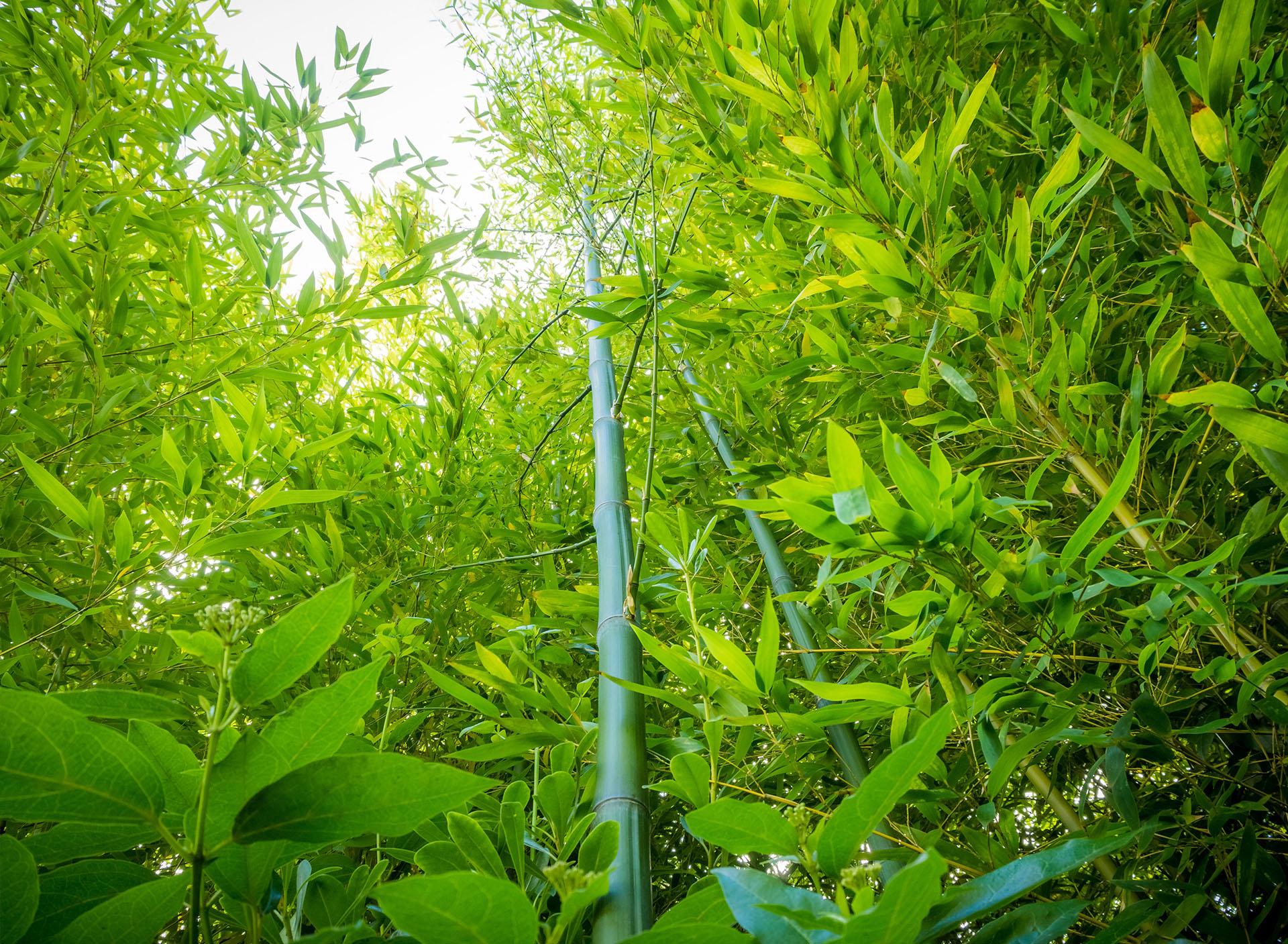 les-avantages-du-bambou