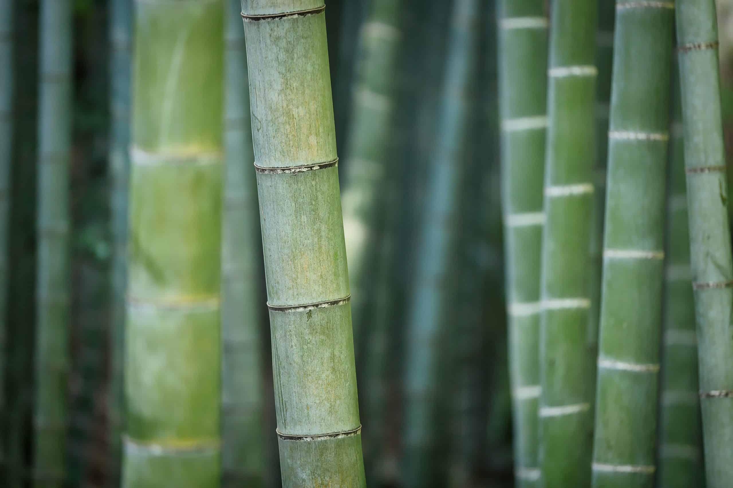 Matériaux-technologique-bambou