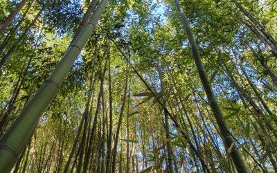 Les préjugés sur le bambou