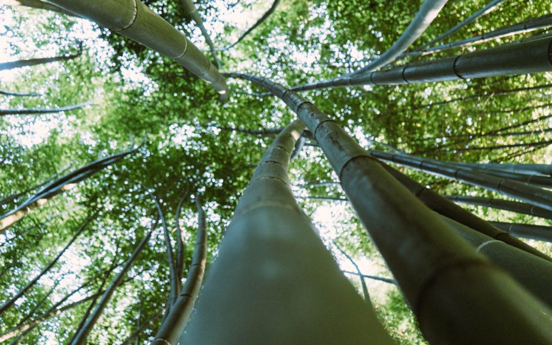 Bambou-assainissement