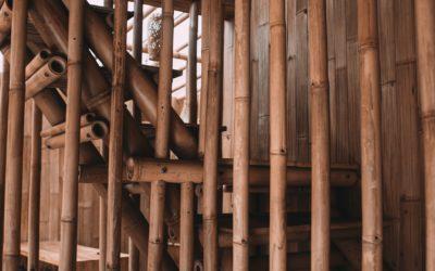 5 utilisations du bambou !